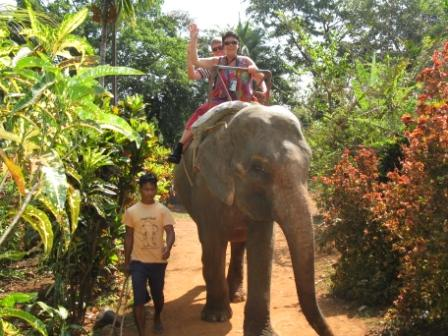 elefanttracking-goa
